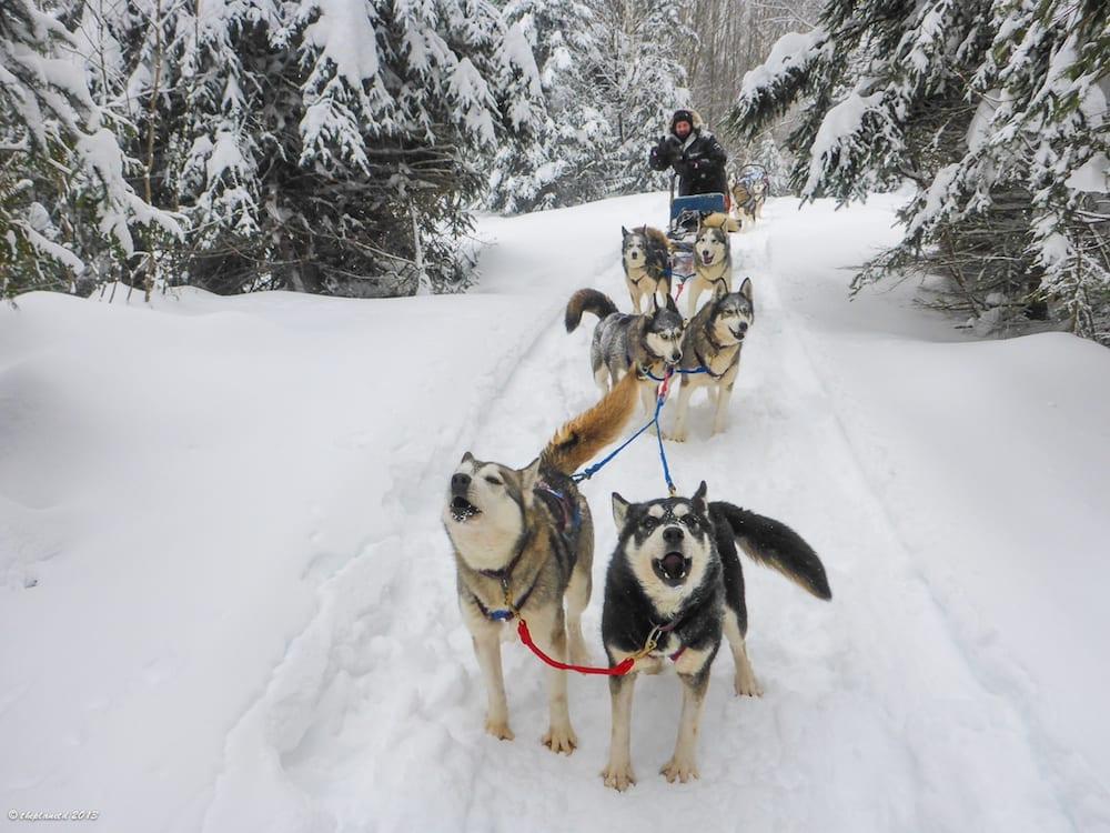 Dog Sledding Tours I Adventure I Whistler BC Canada