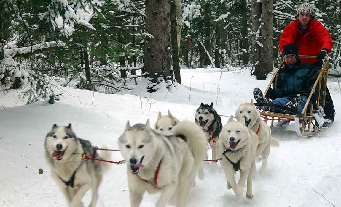Whistler Dog Sledding Tours